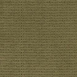 X557 Olive