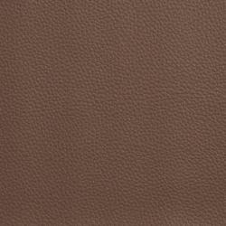 V481 Cocoa