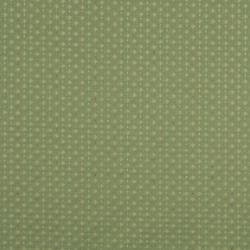 Y271 Kiwi